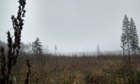 Лосиный в тумане