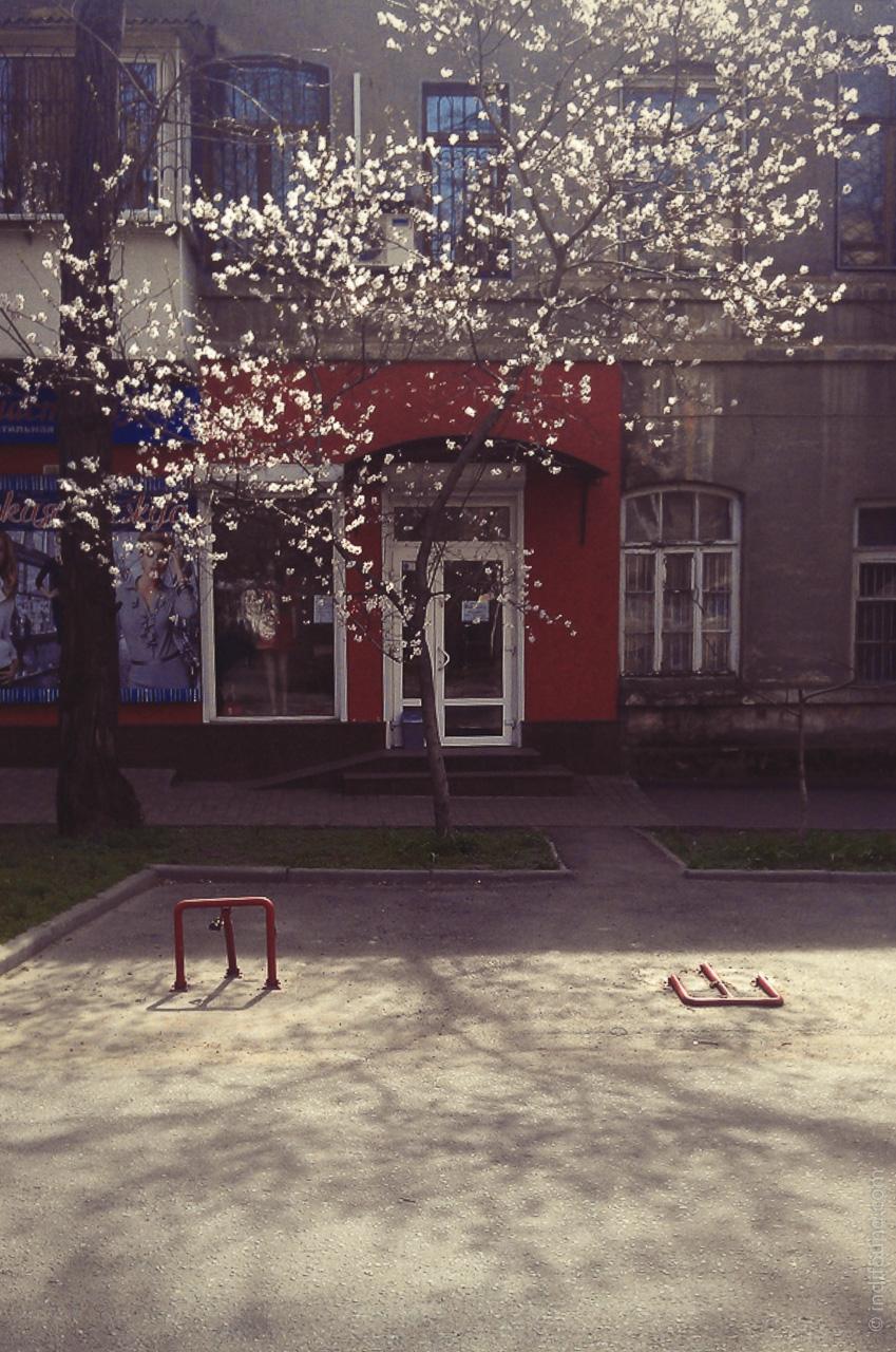 цветение вишни, Одесса