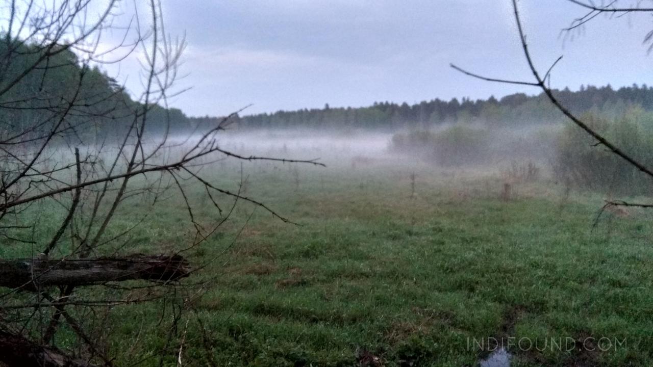 лосиный остров туман