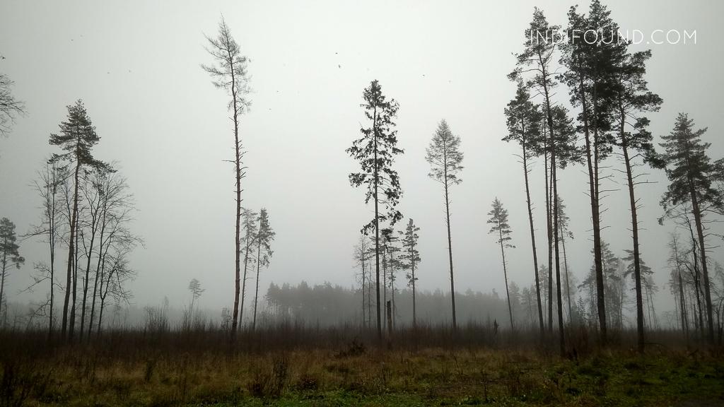 туман на лосином острове